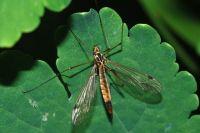 Вездесущие насекомые подчас способны испортить любой загородный отдых