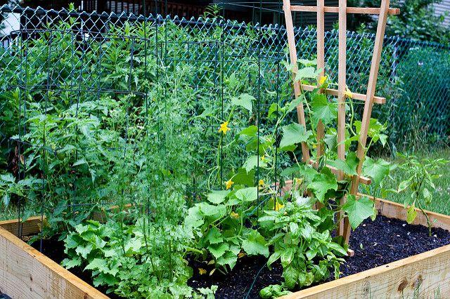 Натуральные удобрения можно использовать и для домашних растений.