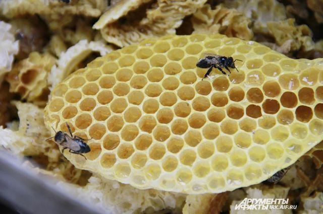 На Куршской косе проведут летний праздник меда Лиепа