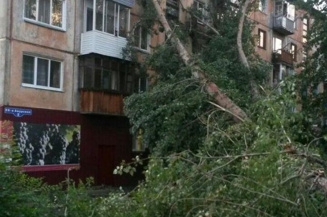 Обрушившиеся деревья повредили транспорт и покалечили людей.