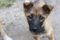 Всего за день трагедии это фото собаки разместили в соцсетях в надежде найти щенку хозяина.