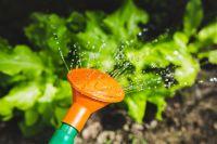 Полив в жару стоит увеличить, но при этом нельзя переборщить, иначе растения могут заболеть