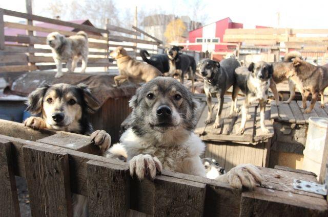 В Новосибирске стали чаще избивать собак.