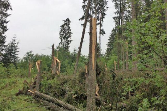 В парке «Виштынецкий» ветер поломал четыре тысячи деревьев.