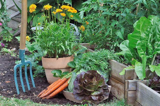 Какие растения сажать на даче в августе 16