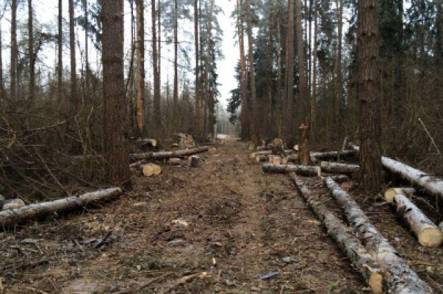 В лесу под Неманом ищут пропавшую без вести женщину-грибника.