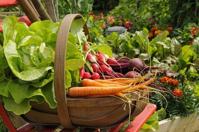 Основа летних диет - свежие овощи и фрукты.