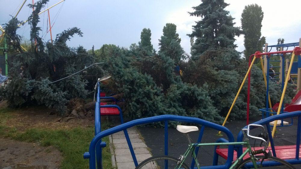 Деревья вырывало даже с корнями