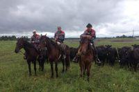 На фермах животные живут в открытых загонах.