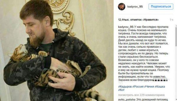 Усатые-полосатые, кстати, сбегали не только от Председателя Правительства, но и от главы Чечни Рамзана Кадырова. Весной этого года через Твиттер он искал кота-беглеца породы тойгер. Котов этой породы называют «игрушечными тигрятами».