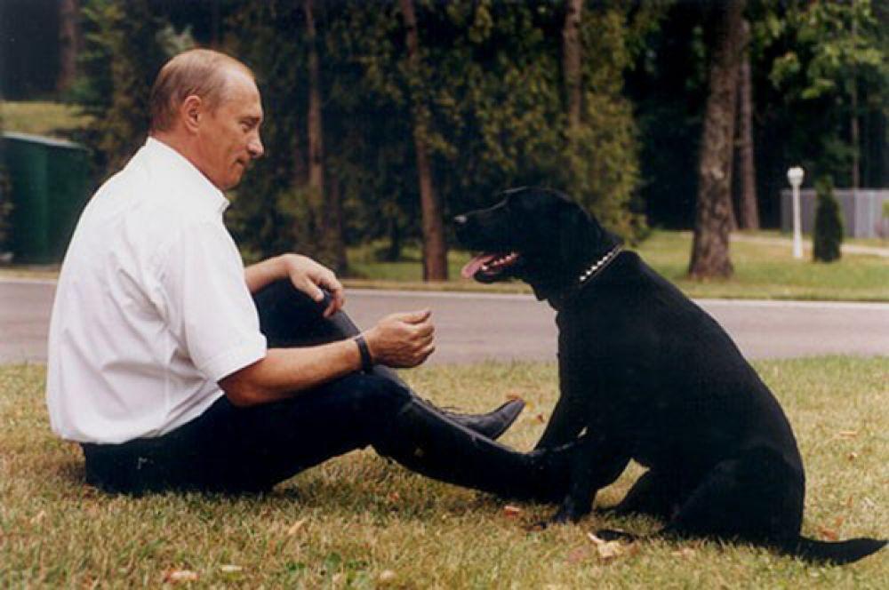Черный лабрадор Конни Полгрейв (подарок Владимиру Путину от «главного спасателя» Сергея Шойгу) известна на весь мир. Однажды она слегка напугала фрау Меркель, внезапно появившись во время ее встречи с российским президентом. Говорят, в 2014 году Конни умерла.