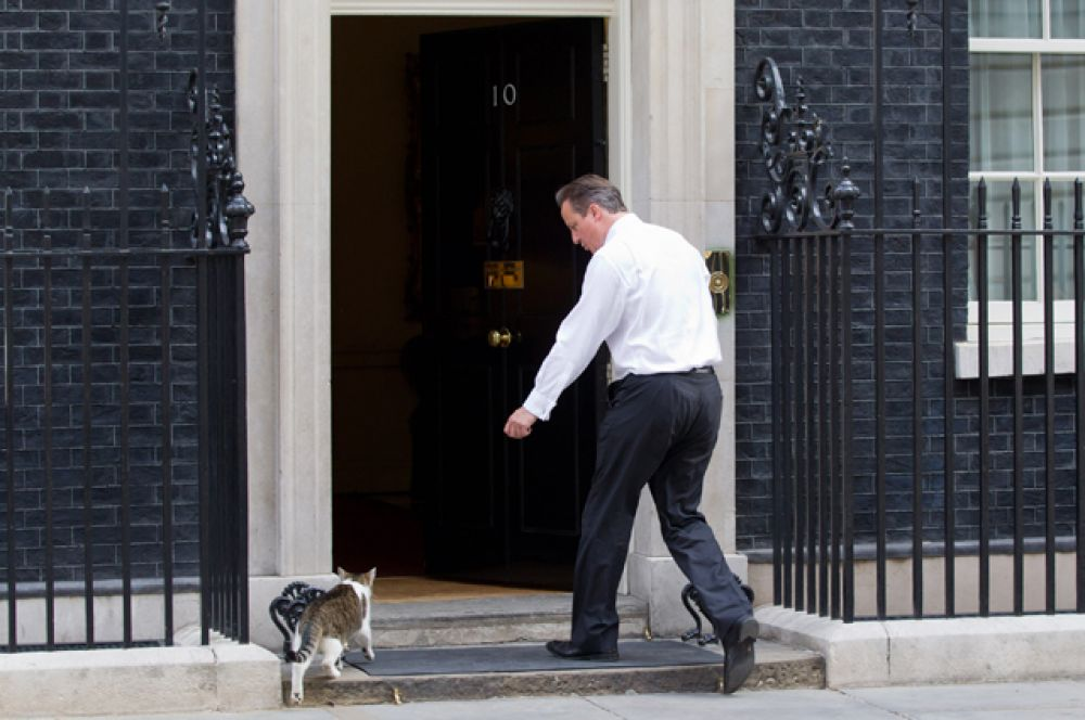 Главным котом Великобритании считается Ларри, живущий в резиденции премьер министра. Ларри был главным мышеловом, но из-за пренебрежения своими обязанностями был смещен с этой должности. В резиденции, однако, жить остался. Питомцем Дэвида Кэмерона, впрочем, его можно назвать с трудом. Экс-премьер министр, выезжая из особняка, решил не забирать кота, а оставить его своей преемнице.