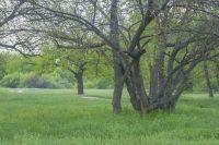Летом и осенью резко увеличивается количество людей, пропадающих в лесах.