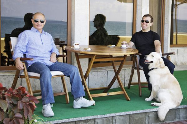 В семье премьера Дмитрия Медведева несколько собак. Самая известная — золотистый ретривер Альдо, он не раз попадал в кадр вместе со своим хозяином.
