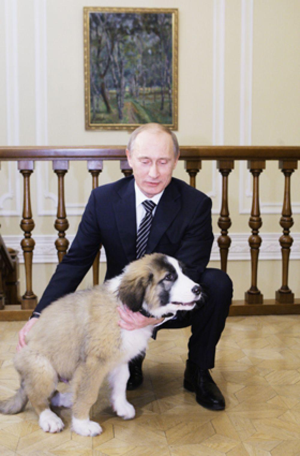 Но Владимир Путин остается заядлым собачником. У него есть болгарская овчарка (каракачанская собака) Баффи, подаренная болгарским премьером Бойко Борисовым в 2010 году. Имя Баффи придумал московский школьник: Владимир Путин тогда попросил россиян помочь ему в этом вопросе.