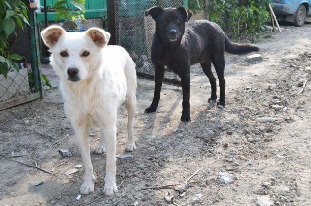 Красноярка отсудила компенсацию занападение бродячей собаки надочь