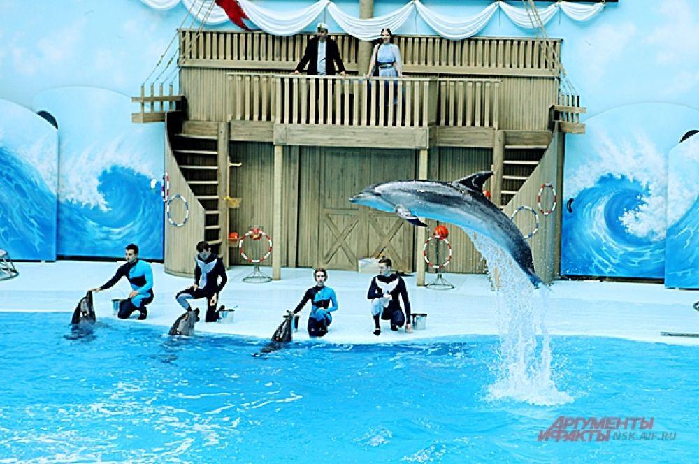 Дельфины - гвоздь программы. Самые востребованные артисты, среди обитателей морских глубин.