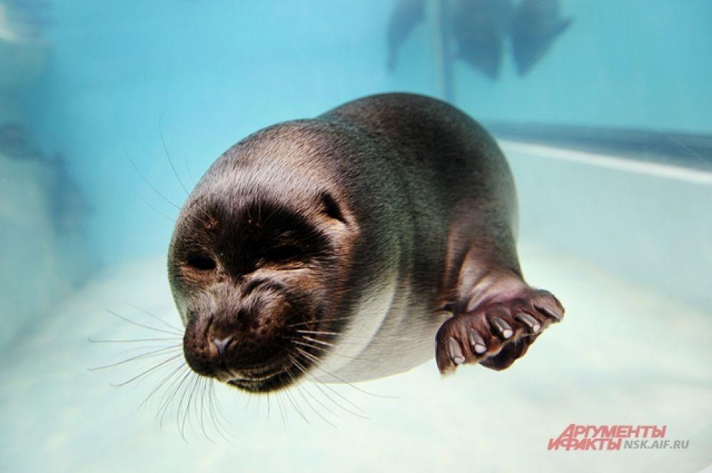 Для обитателей подводного царства созданы все условия для комфортной жизни.