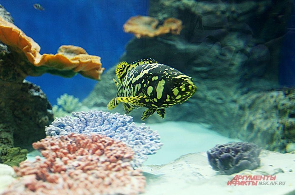 За один месяц все животные съедают, в общей сложности, около 3,5 тонн рыбы наивысшего качества, шоковой заморозки.