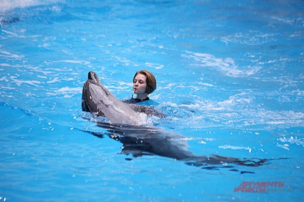 Шоу с морскими животными будут показывать зрителям трижды в день.