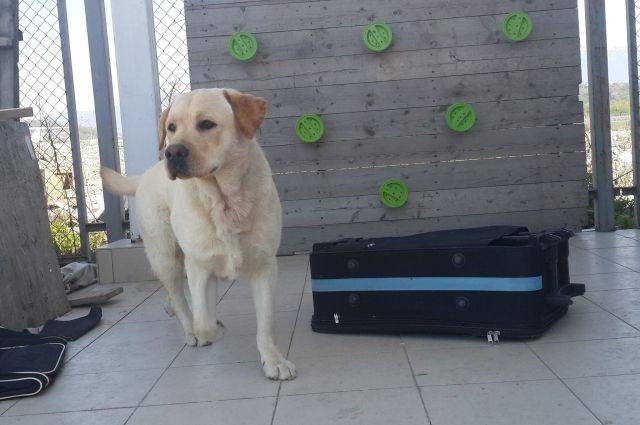 Названа порода собак, чаще всего нападающего налюдей