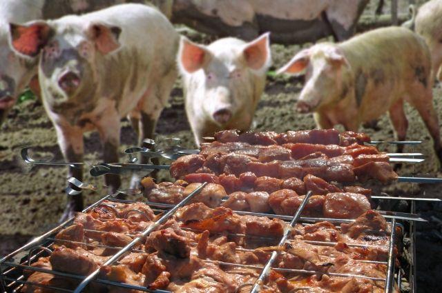 Чтобы не допустить дальнейшего распространения болезни, поголовья кабанов и свиней забивают.
