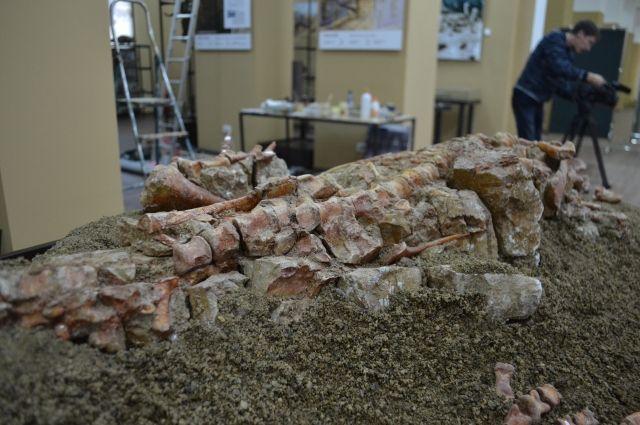 Посмотреть на раскопки интересно, но лучше разглядывать останки динозавров именно в музее.