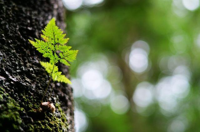 Собянин поручил создать вЖулебинском лесу полноценную рекреационную зону