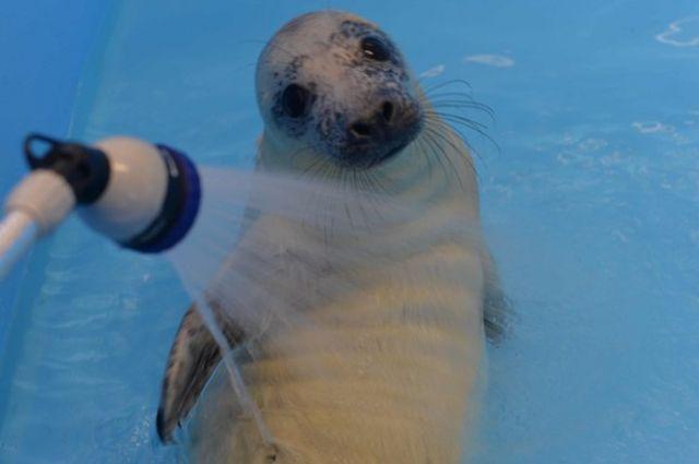 «Водоканал» отпустил самку тюленя вФинский залив