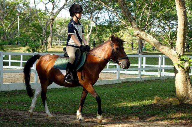 МИниатюрные лошадки показали свою красоту и мощь