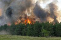 Леса продолжают гореть
