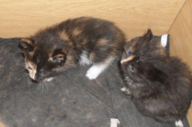 Бездомная кошка сама пришла вветклинику, чтобы родить котят