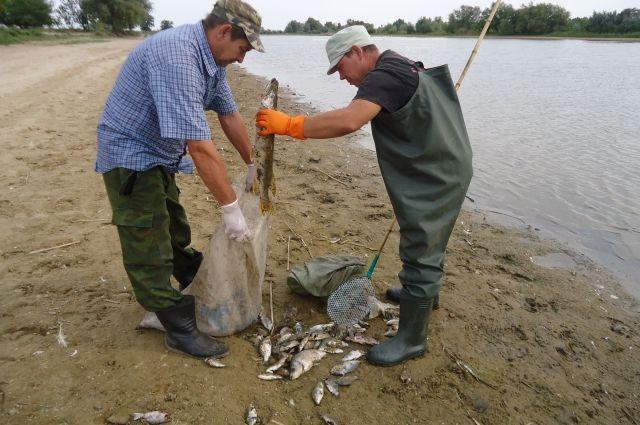 рыбалка в зао