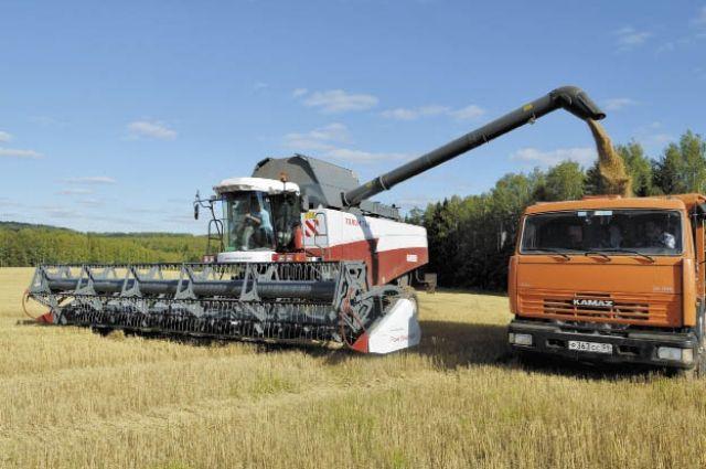 В этом  году сельхозпредприятия края уберут 250,6 тыс. га зерновых.