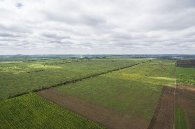 ВАлтайском крае закончился основной этап Всероссийской сельскохозяйственной переписи