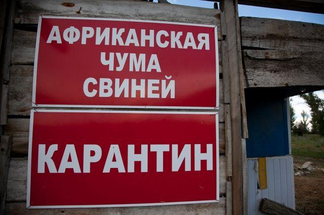 Африканская чума свиней зафиксирована еще в 2-х районах Одесской области