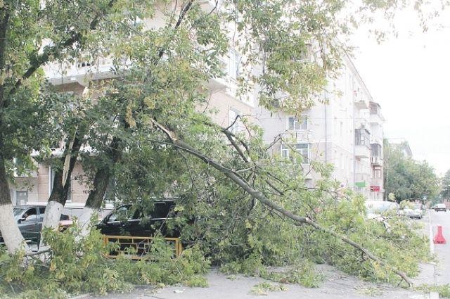 Большой канадский клён на ул. Минина, 5 так и пролежал весь следующий день.