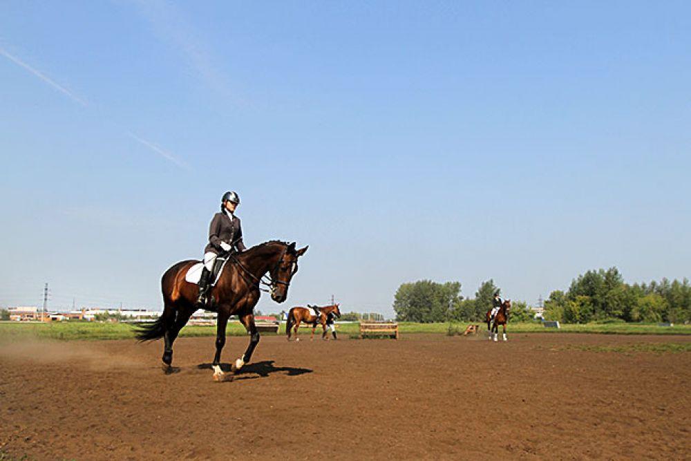 Выступают на соревнованиях лошади до 16 лет. Иногда особо сильные могут выступать и до 22 лет. Но таких животных не много. В этом возрасте с ними в основном работают в конных школах и тренируют детей.