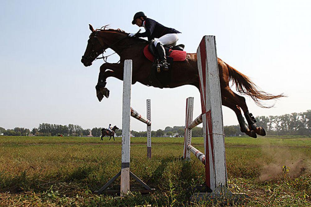 Кони, которые выступают в конкуре, по своему настрою и темпераменту отличаются от коней, которые выступают в выездке.