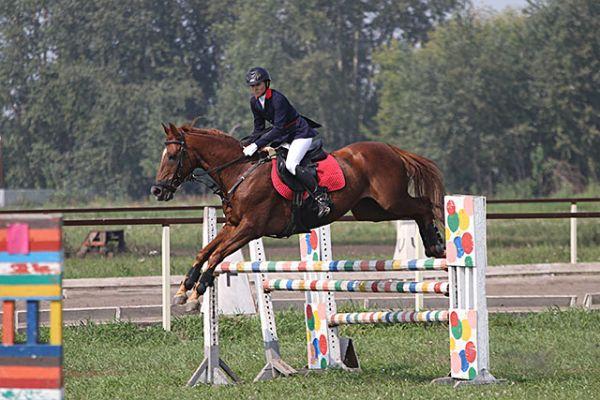 В соревнованиях главное показать себя и лошадь. Ведь животному тоже важно выступить, и покрасоваться перед своими соперниками. Многие из них ждут старта с нетерпением, и бьют копытом о землю, делают невообразимые прыжки.