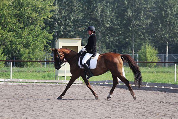 Выездка. В этом виде соревнований наездник показывает как умеет управлять лошадью. Животное же демонстрирует свою грацию и послушность.