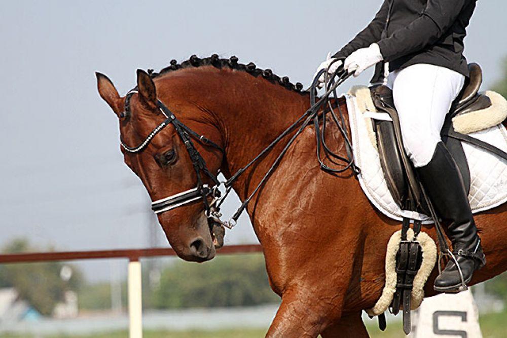 Внешнему виду лошади наездники уделяют много внимания. Существует мода на причёски для лошадей, на экипировку. Даже уздечки спортсмены выбирают не простые, а с украшениями. Конечно, регламент не позволяет превращать лошадь в нарядного единорога, но небольшие элементы, которые подчёркивают грациозность разрешаются.