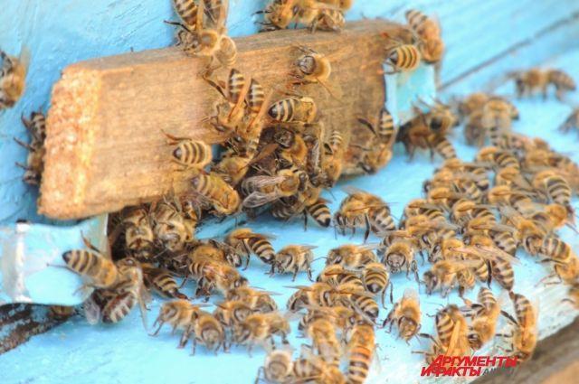 Найти настоящий мёд не просто.