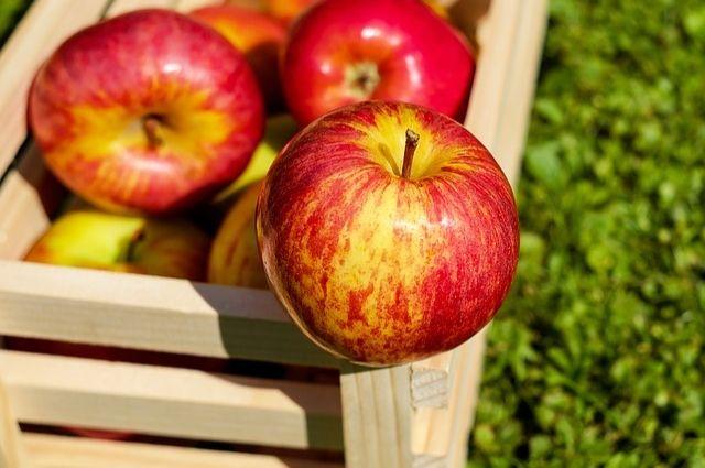 Яблоко - универсальный фрукт.