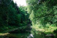 Две недели женщина шла по лесу и питалась росой.