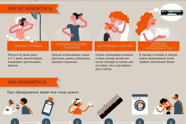Как бороться с педикулёзом? Инфографика
