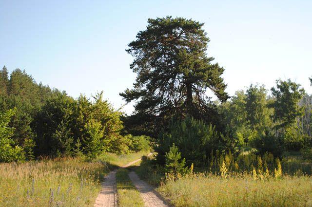 11:43 1 734 Ученые обнаружили самое старое дерево в Европе На севере Греции нашли сосну чей возраст составляет окол