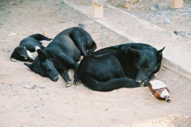 В Омске часто можно встретить бродячих собак.