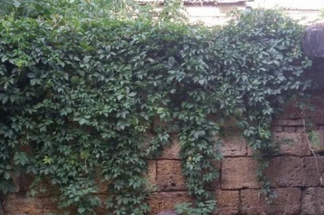 Старинная стена пересекает весь двор одного из домов по переулку Крыловскому.