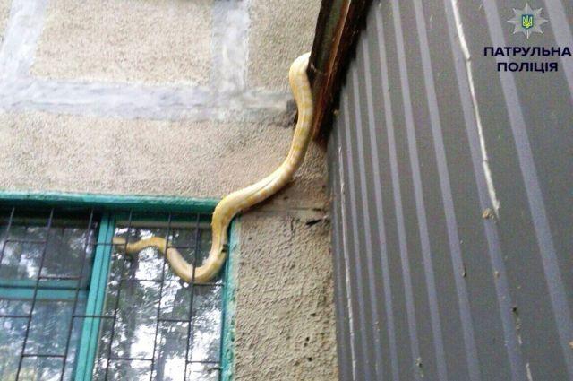 Полтавские патрульные ловили экзотическую змею, выпавшую с 5-ого этажа
